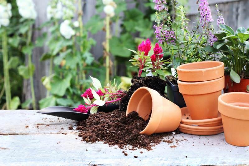 В декабре и других месяцах, чтобы комнатные растения чувствовали себя хорошо, рекомендуется осуществлять их посадку согласно лунному календарю